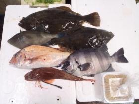 16鮮魚セット2015622