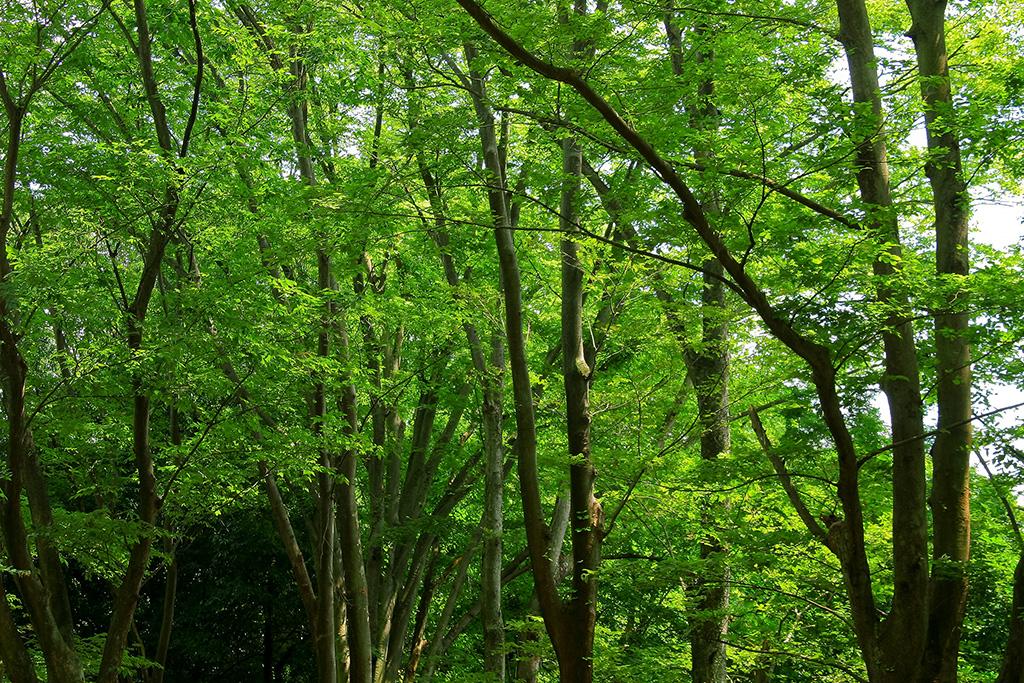 tree_woods_00026.jpg