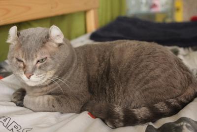 host hostess cats 4 resized