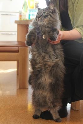 host hostess cats 9 resized