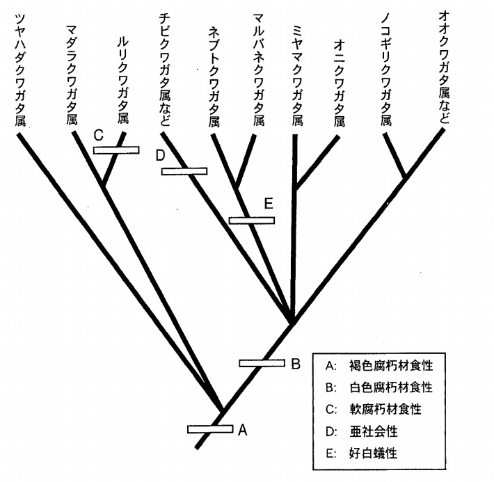 Stag_beetles_phylogenetic_tree.jpg