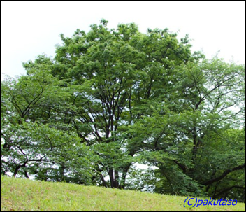tree-bento.png