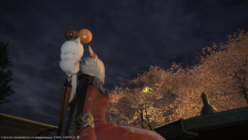 新生14 440日目 桜を見ながらこんばんにゃ~