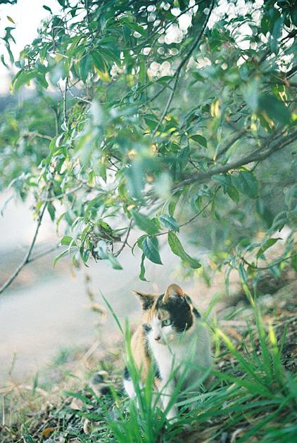 斜陽と三毛猫