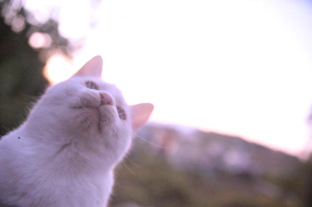 残照と白猫