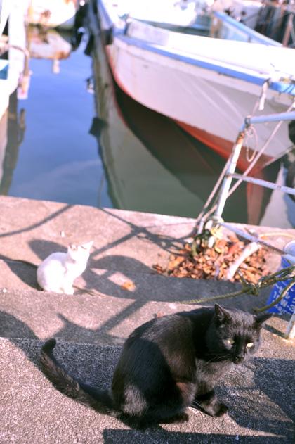 しまの黒猫