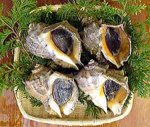 アカニシ貝2