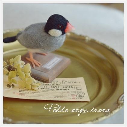 羊毛桜文鳥