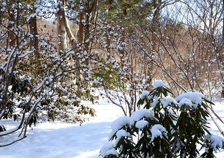 019m雪景色