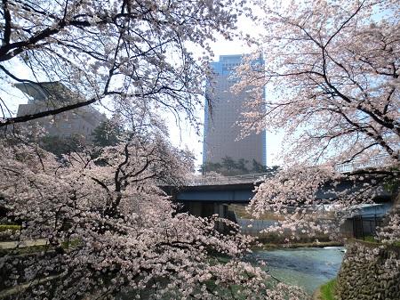 010県庁と桜