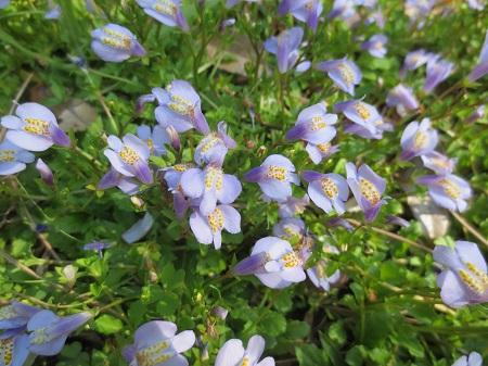 005草の中の花