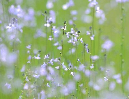 077繊細な花。