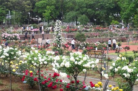 012敷島公園バラ園