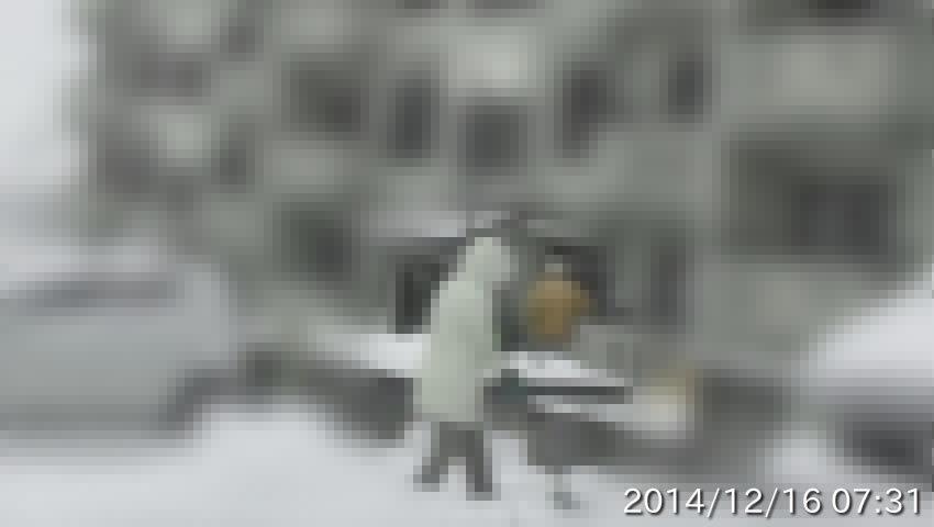 20141216073104b.jpg