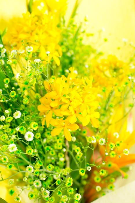 flower20150531-4083.jpg