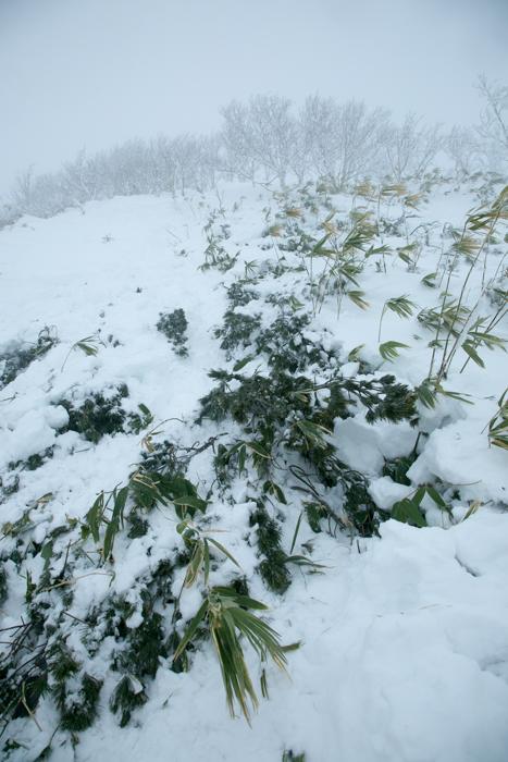 shiraoidake20141228-2449.jpg