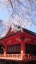 中國/新宿花園神社にて