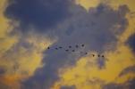 鳥達の編隊