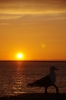夕日とカモメ