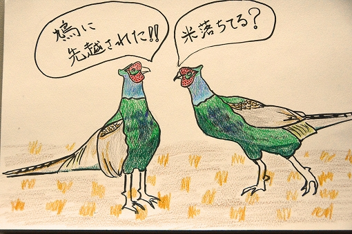 雉2羽出会い20150130
