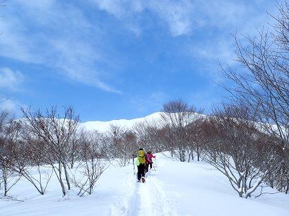 野伏ヶ岳05_420