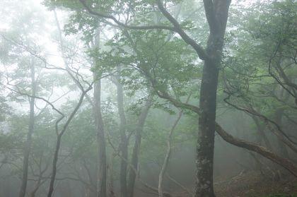 20150607釈迦ヶ岳15