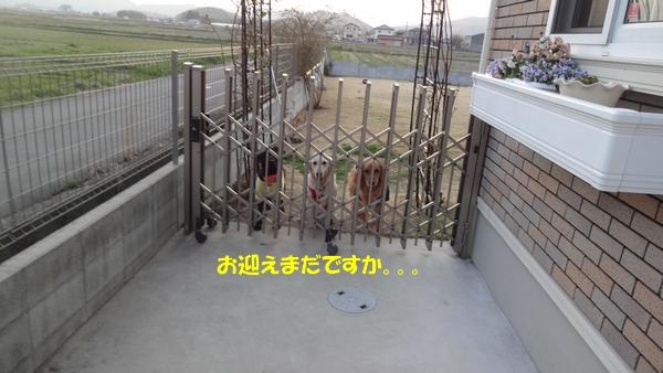 DSC06736.jpg