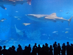 沖縄美ら海水族館 (2)
