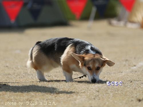 150221suzuka05.jpg