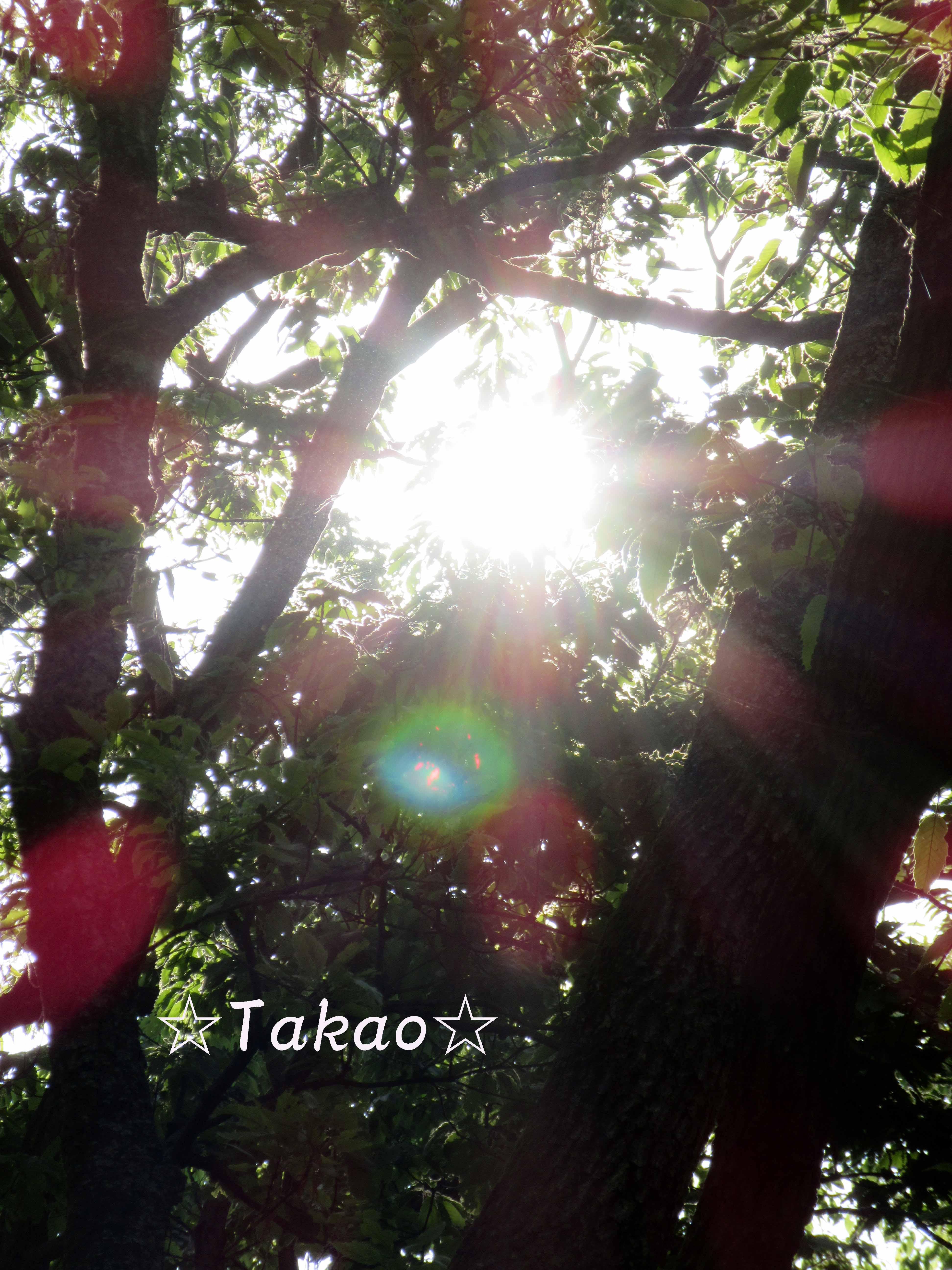 2015_0427_073706-IMG_0111のコピー