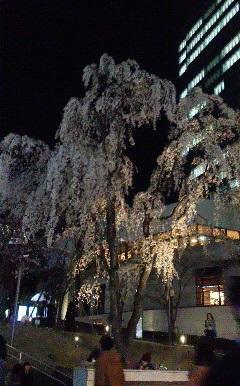 20150328akasaka1.jpg