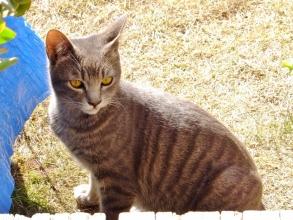 家の庭で勝手に遊ぶ~近所のノラ猫のロシちゃん♪初めて遭遇しても人懐こいです\(~o~)/2015.01.19