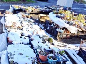 2015年元旦の夕方からの初雪は、日陰は長い北側部分は、3日の朝でも溶けません(ToT)。2015.01.03