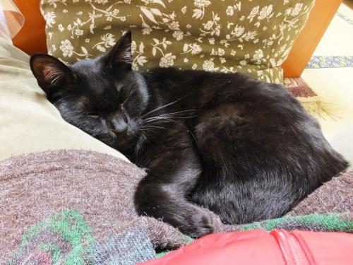 家の黒猫のタコちゃ~ん♪私の胡坐の中でスヤスヤ爆睡中~\(^o^)/2015.01.12