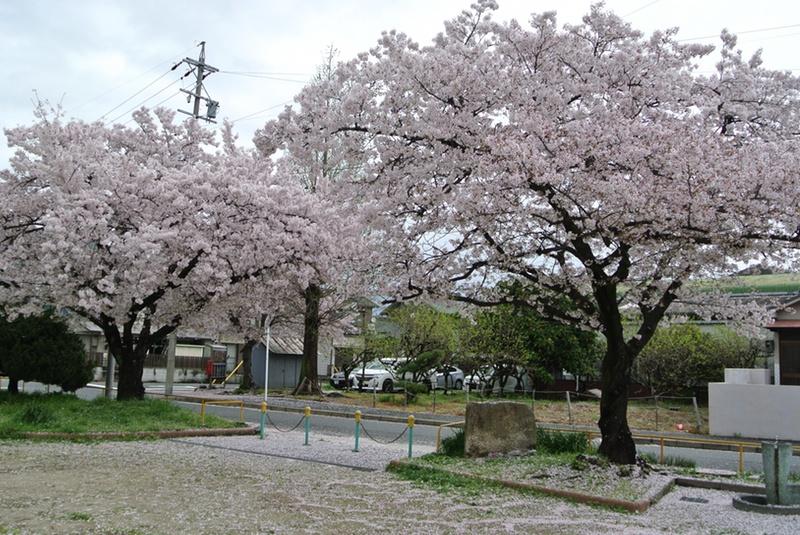 2015SAKURA008.jpg
