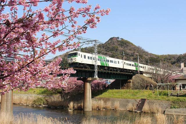 ⑤河津桜踊り子