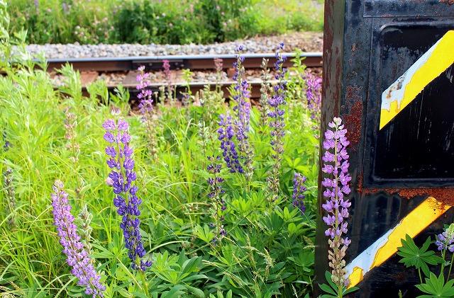⑨線路端の花