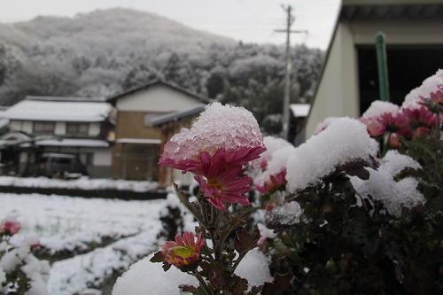 15_1_12_yuki (7)(1)