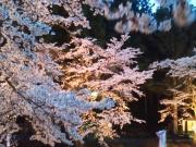 15_4_3_yozakura (2)