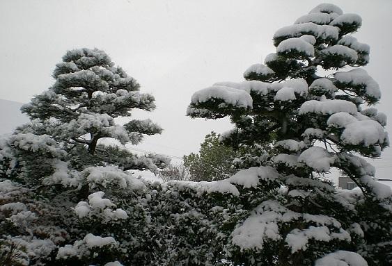 2014-12-26雪景色(18日)その2