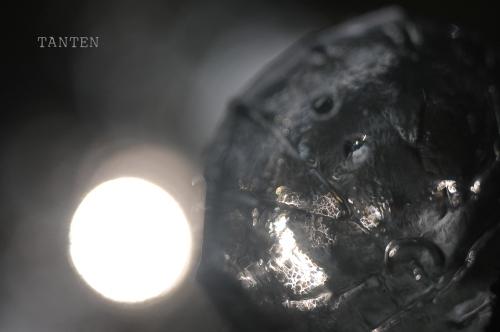 S-タンテンの種-光-a1