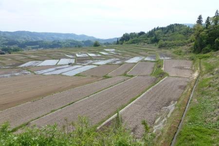 東日本03 山形県 椹平の棚田