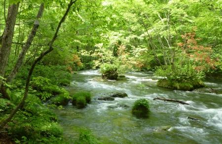 東日本06 青森県 奥入瀬渓流