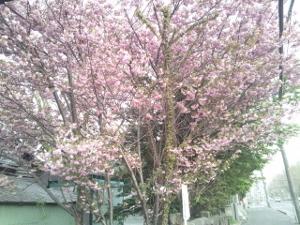150506_札幌諏訪神社 2 (300x225)