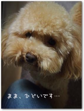 2014-12 shin 04