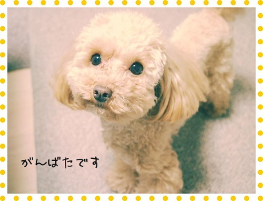 2015-03 Wish 07