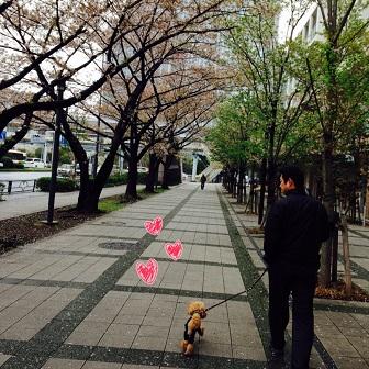2015-04 Sakura 05