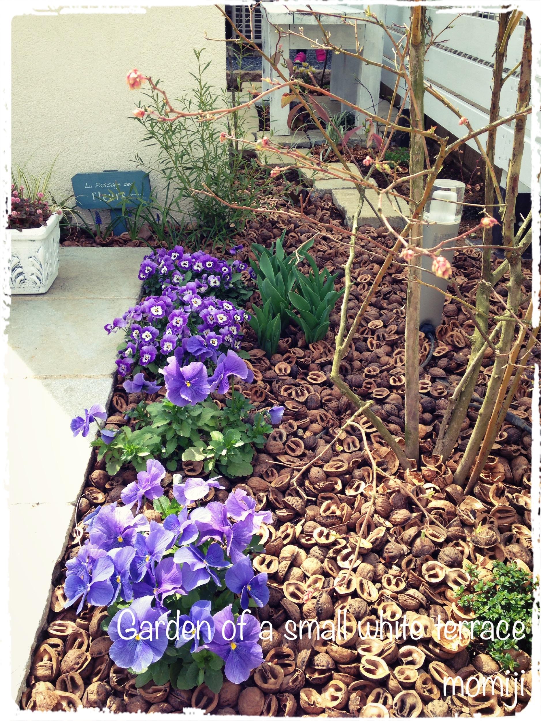 玄関アプローチ 2015 春