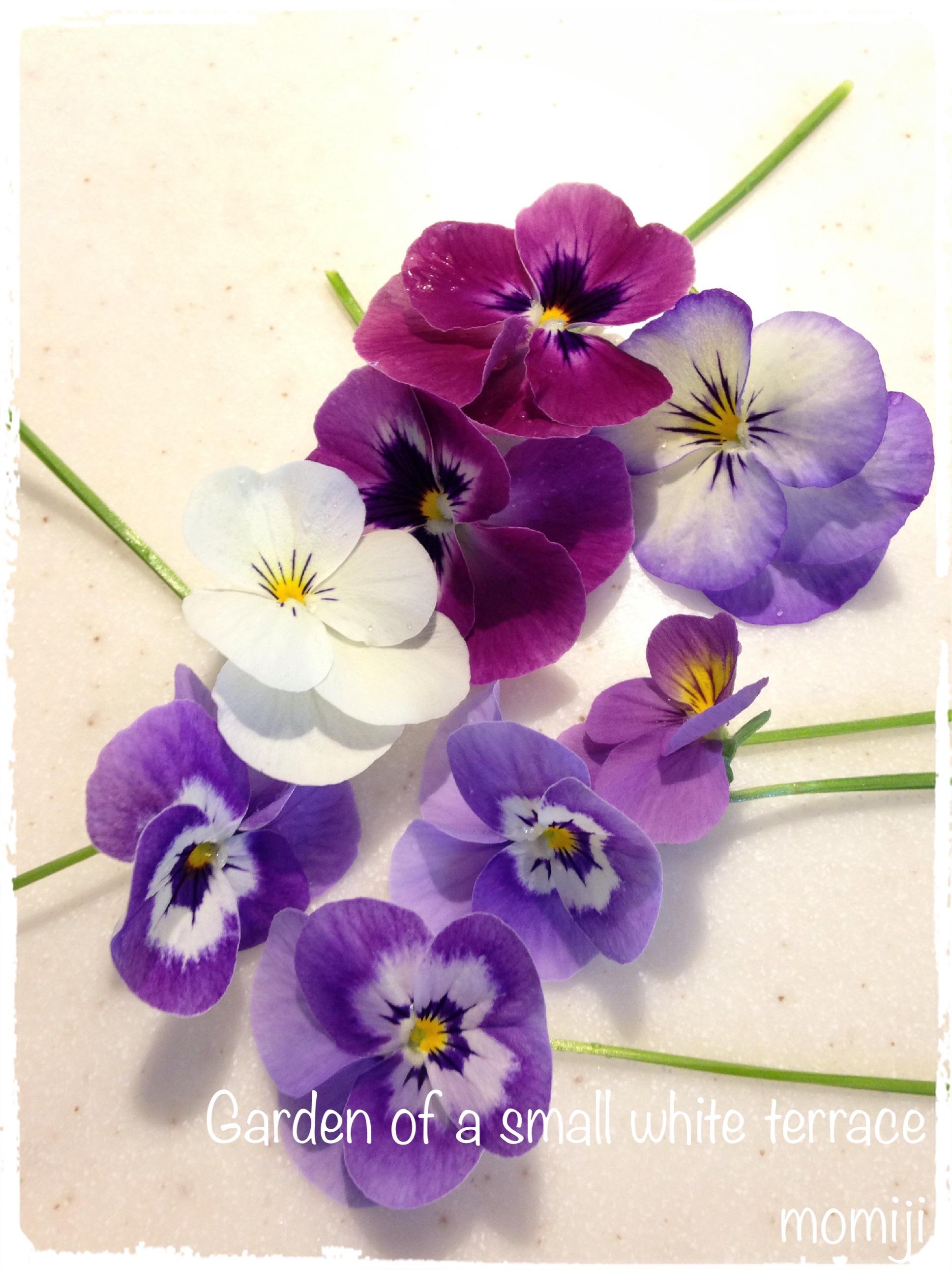 アイロンで押し花