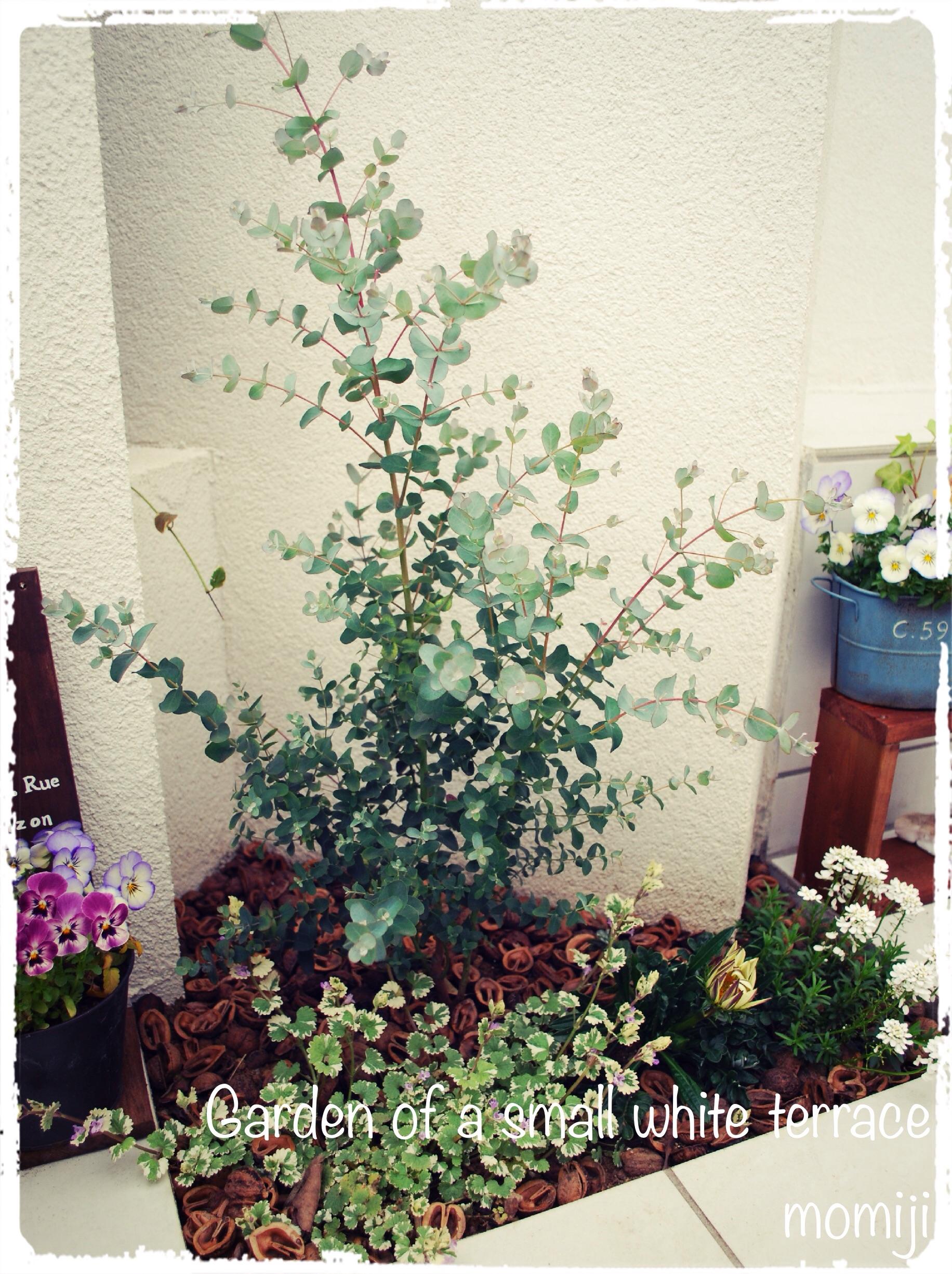 テラスの小さな花壇